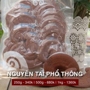 Linh chi nguyên tai phổ thông - Linh chi trường sinh