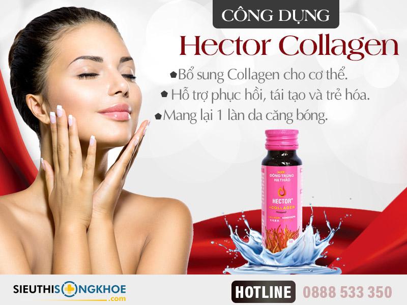 công dụng đông trùng hạ thảo hector collagen