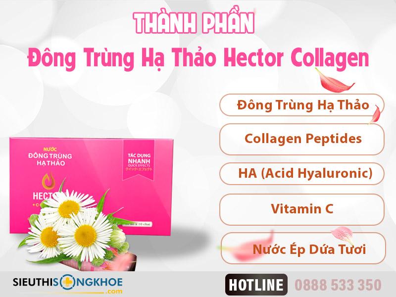 thành phần đông trùng hạ thảo hector collagen