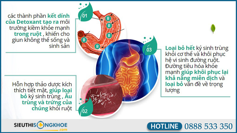 co che hoat dong vien uong diet ky sinh trung detoxant