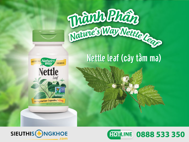 thành phần của nature's way nettle leaf